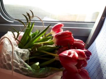 Tulipes voyageuses
