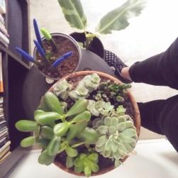 Plantes grasses & Cie
